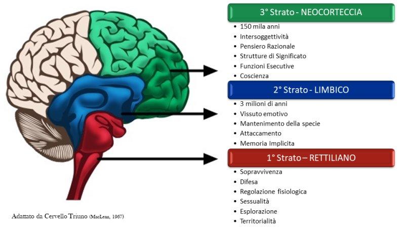 Cervello Triuno